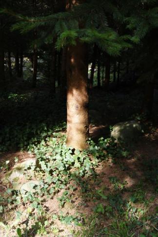 Wonder Forest #4
