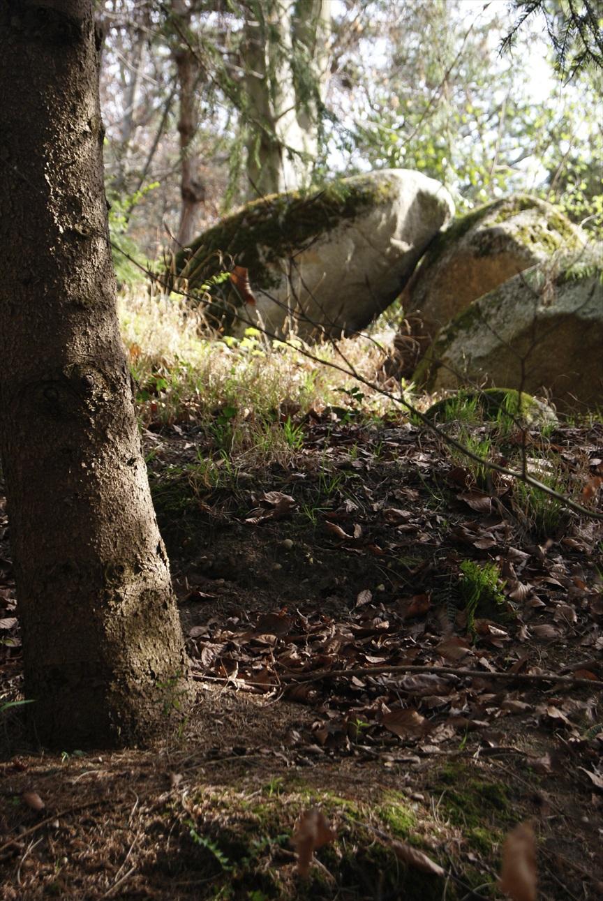 Wonder Forest #1